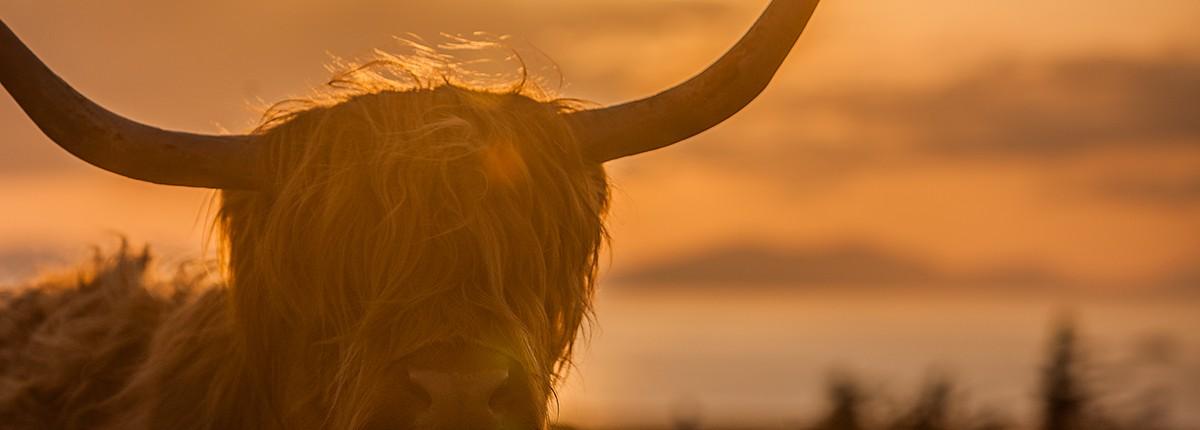 Schottland Kalender 2017