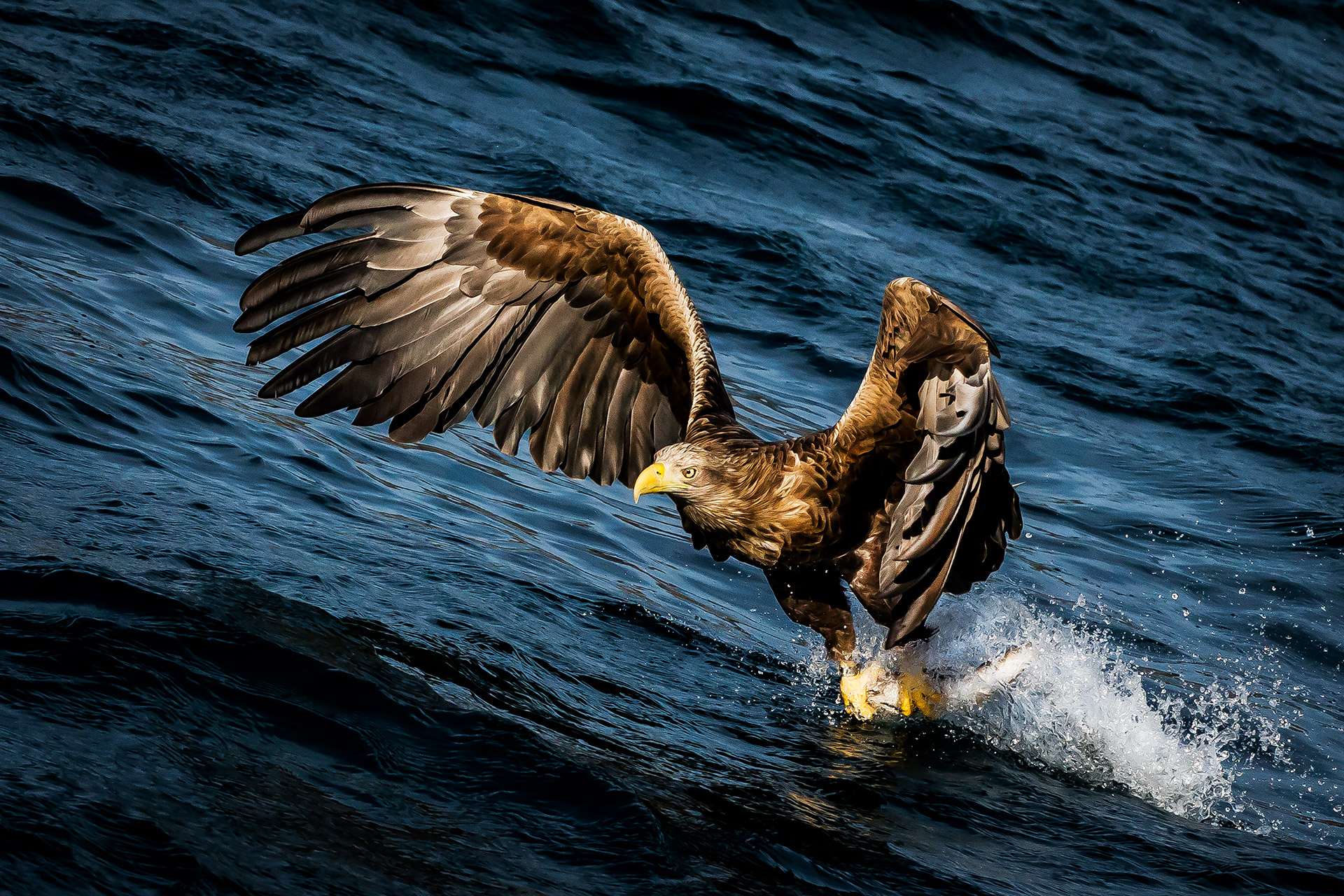Sea Eagle, Frank Heumann, National Geographic