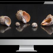 Firmenhomepage: Die Muschel am Strand
